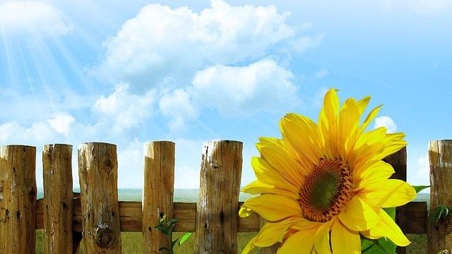 El entorno básico de vida que Dios crea para la humanidad: La temperatura